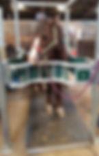 angela-adair-pony-theraplate.jpg