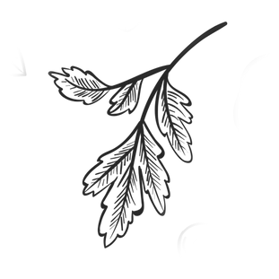 Leaf Coriander Vector 2.png