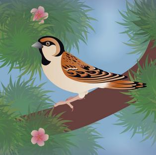 Sparrow Animation