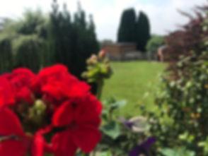 red-flower.jpg