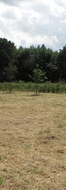 Kompensationsmaßnahme Hardter Wald