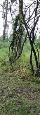 Landschaftspflegerischer Begleitplan, Rehhecke, Neuss
