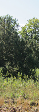 Landschaftspflegerischer Begleitplan Landwirtschaftlicher Betriebshof, Kreis Düren