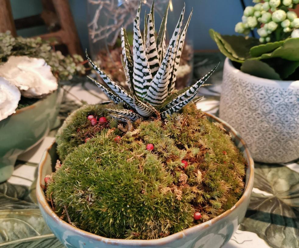 Les plantes boules