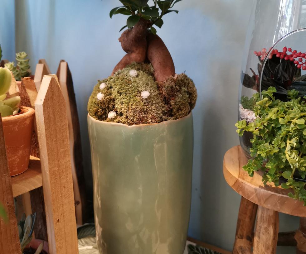 les petites plantes originales du moment