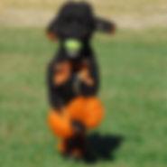 OrangeSpike2.jpg