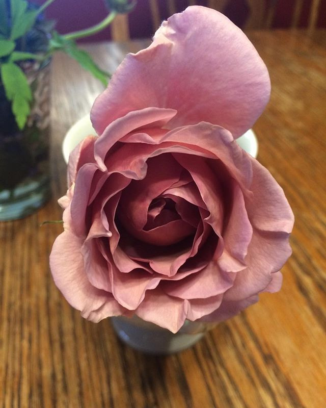 My first rose of the season