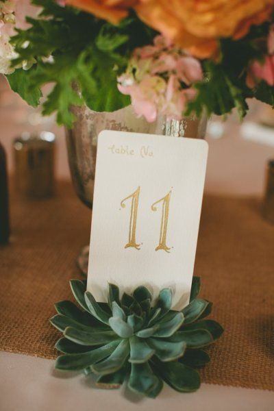 Succulents as table numbers