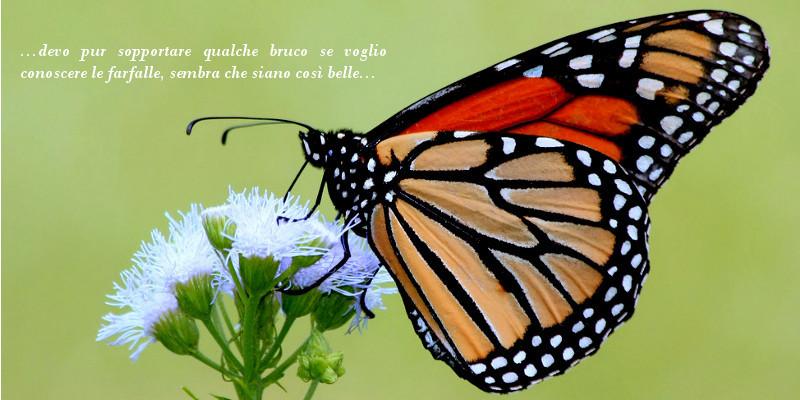 img04_butterfly.jpg