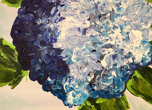 Blue Hydrangea, 2017
