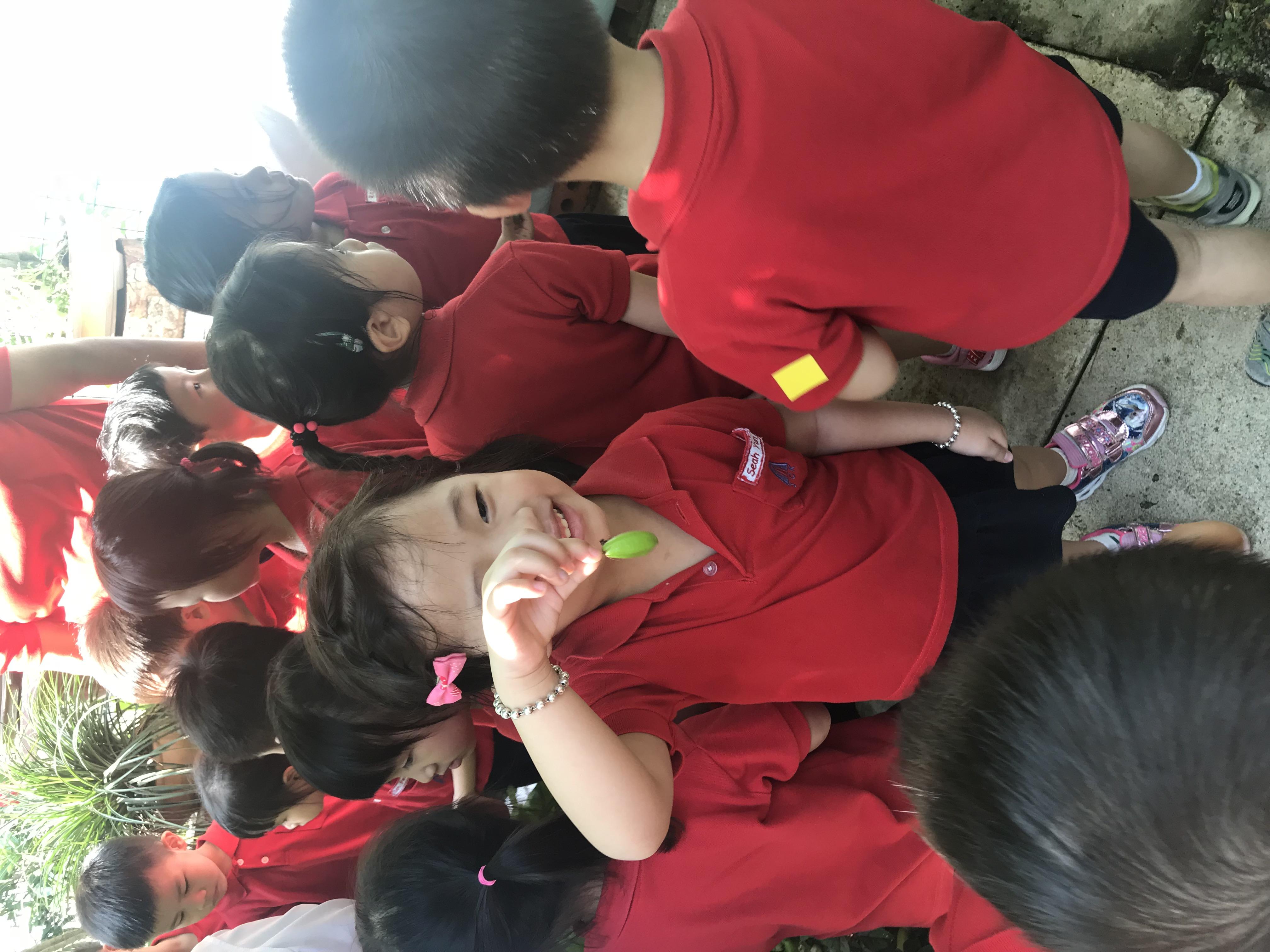 Nursery Visits Fruits & Veg Garden