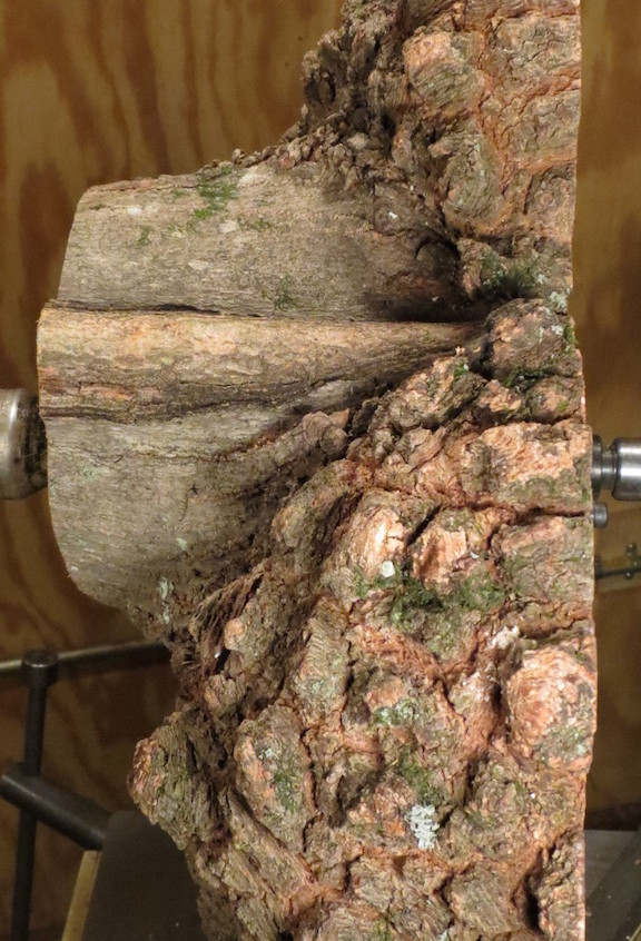Another view of the burl