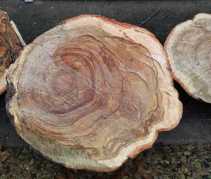 Pieces Cut from the Burl