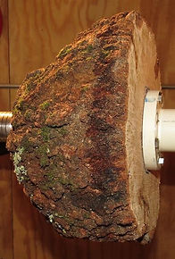 large cherry burl on a lathe
