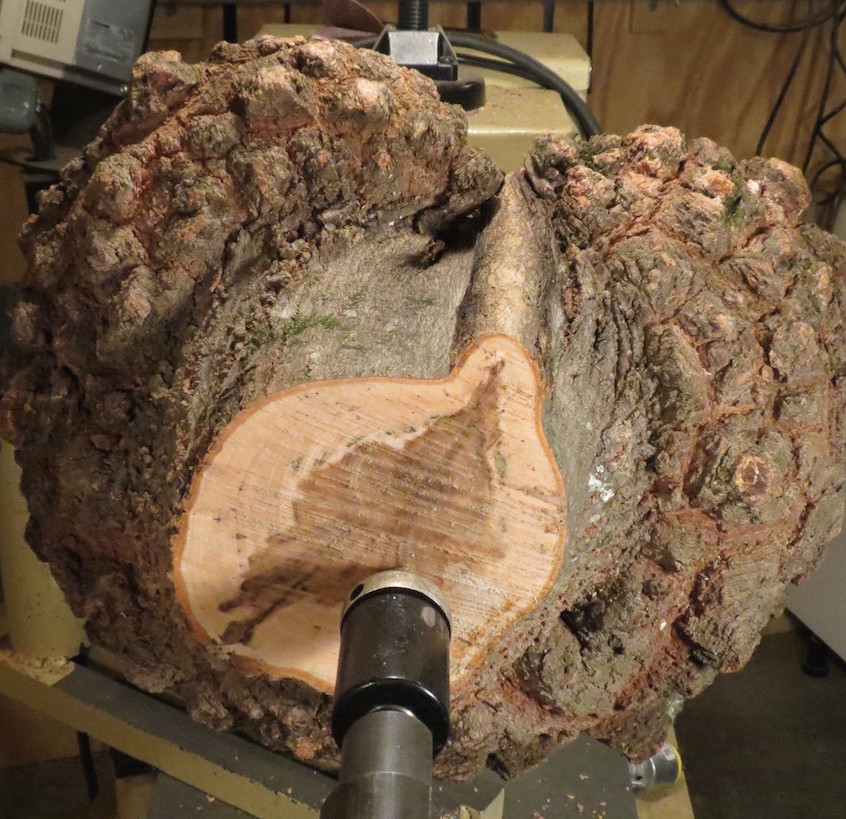 End view of burl on lathe
