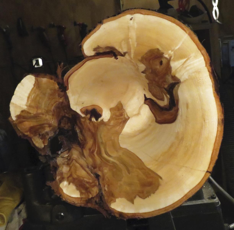 Second Half Birch Burl