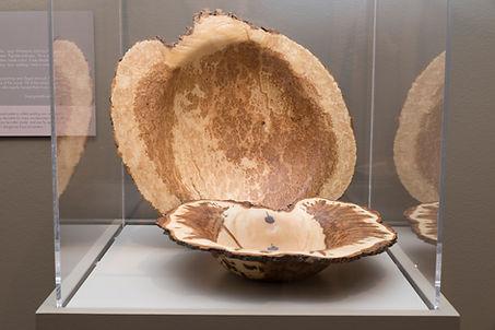Aspen and maple burl bowls at the Chicago Botanic Garden