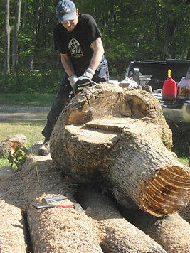 Lou Pignolet cutting an enormous black ash burl