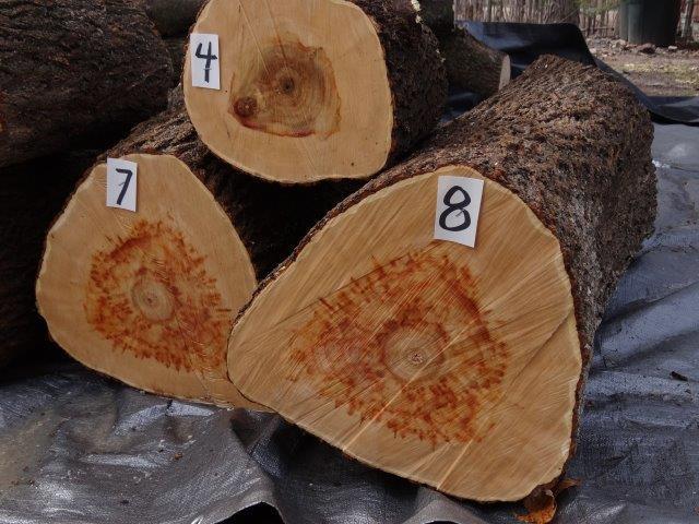A Load of Box Elder Logs