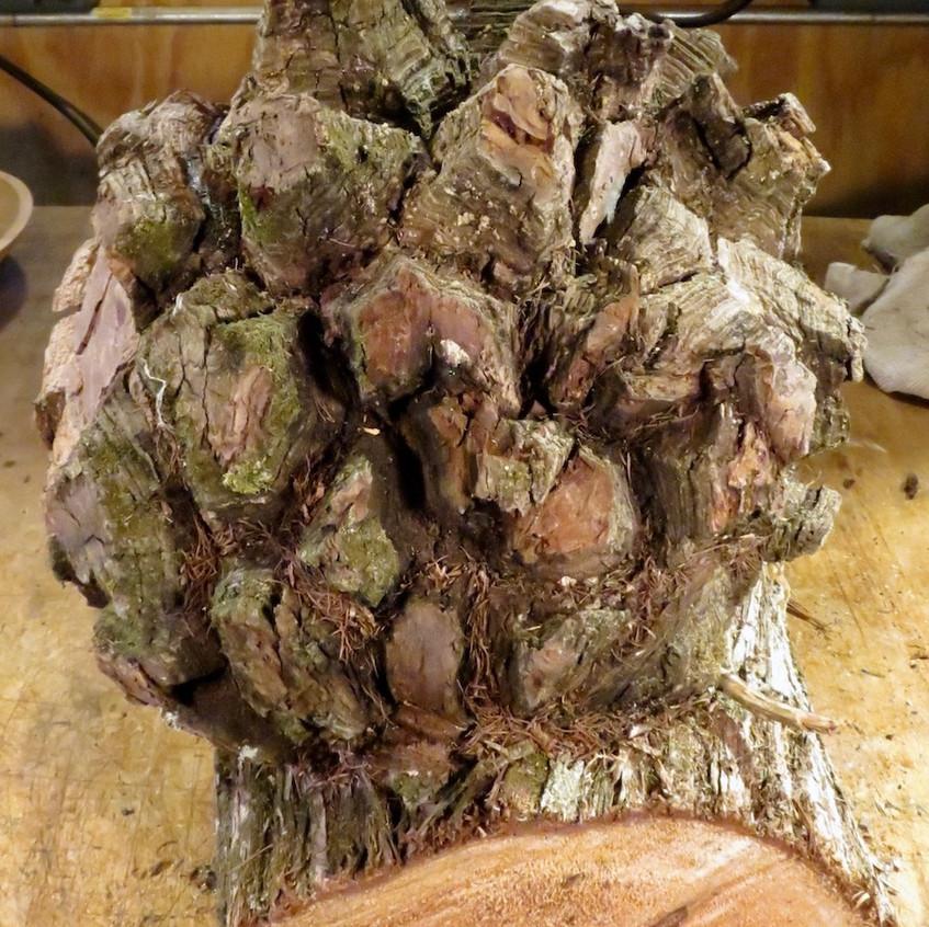 Cedar Burl Burl