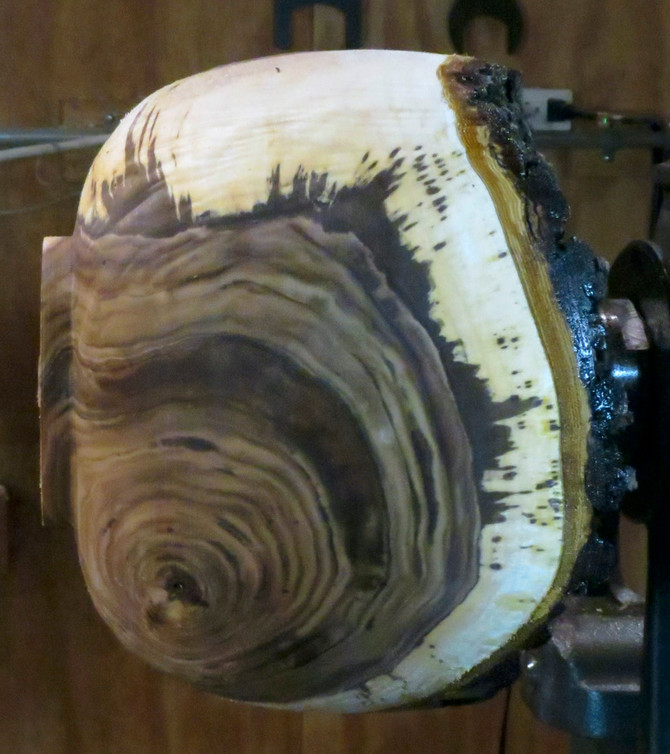 Another Beautiful Black Walnut Crotch