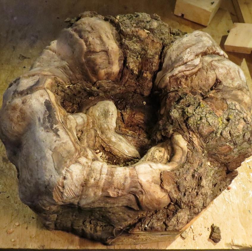 "Oak Burl 15"" diameter"