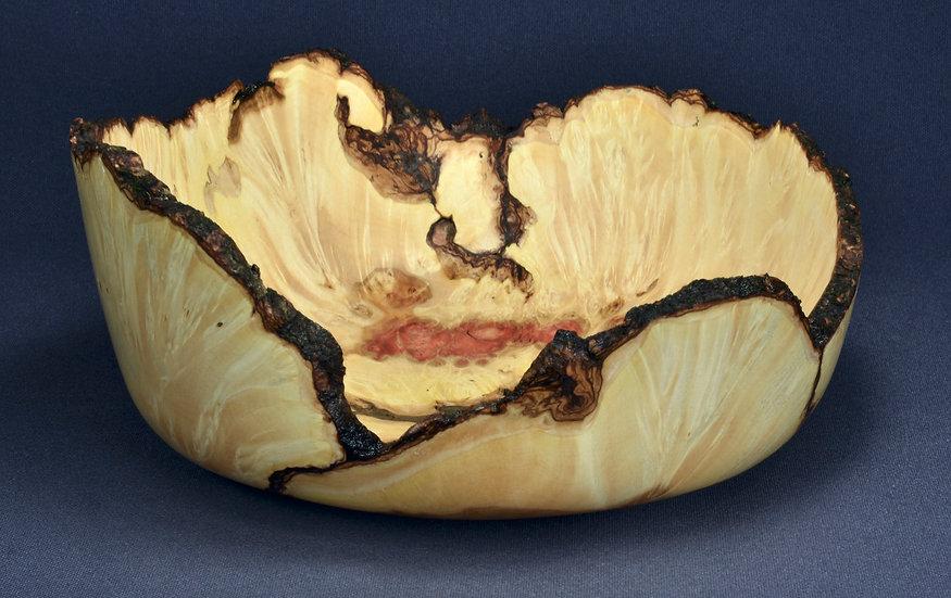 Colorful Box Elder Burl Bowl (21SF1)