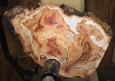 An aspen burl on a lathe ready to be turned