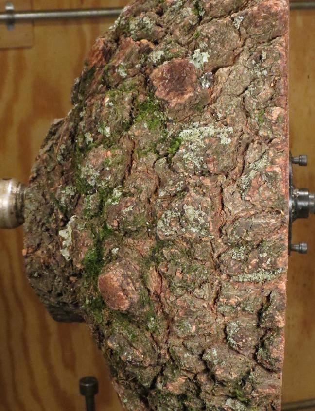 Burl piece on the lathe