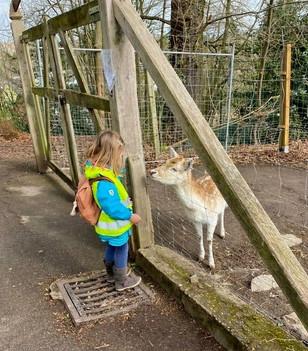 Ausflug zum Tiergehege