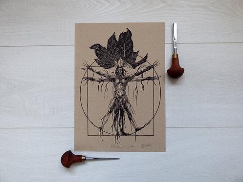 Vitruvian Mandrake