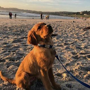Brady (Belle x Preacher puppy)