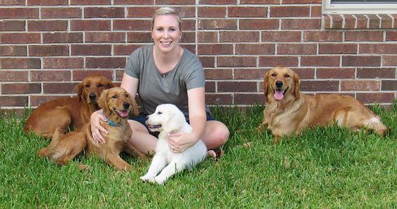 Golden Retriever Puppies, Golden Retriever Puppies for Sale, Mini Golden Retrievers