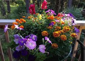 Jardinière (mélange de différentes plantes)