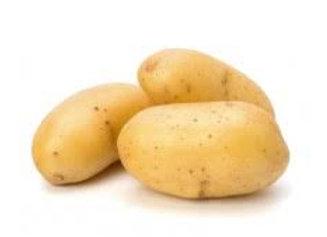 pomme de terre AGRIA (bio)