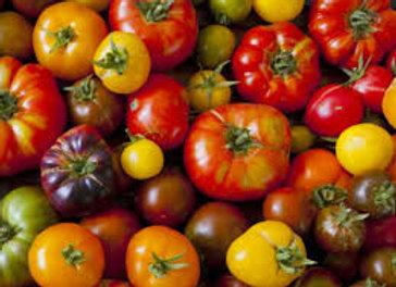 tomates anciennes variété assortie (bio)