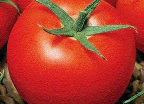 tomates St Pierre (bio)