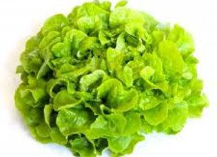 Salade (batavia, chêne vert, laitue) bio