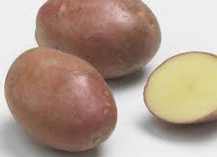 Pomme de terre Désirée (bio)