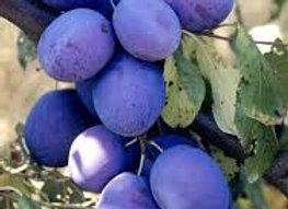 Prunes bleues