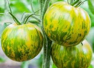 Plant de tomate green zebra (verte)