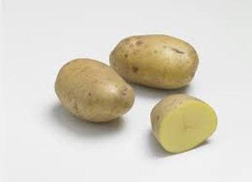 pomme de terre vieille (agria) bio