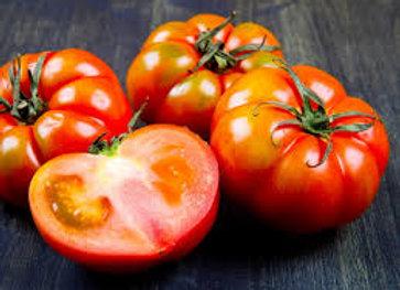 Plant de tomate marmande