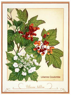 Lilianne Coulombe-2