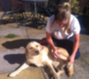 canine dog physiotherapy