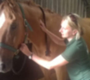 equine horse physio physiotherapy