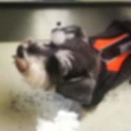 canine physio