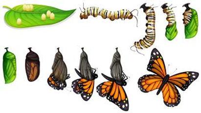 butterfly-st.jpg