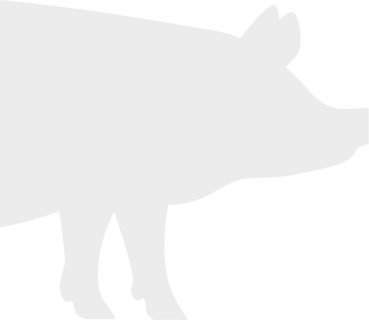 HEADER-SWINE.png
