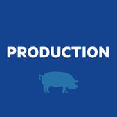 Hog Production